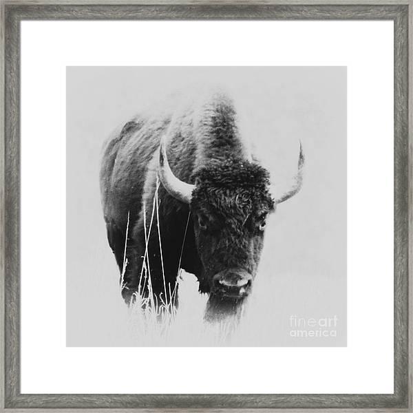 Buffalo Gal Framed Print
