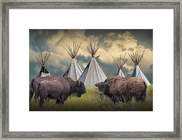 Buffalo Herd On The Reservation Framed Print