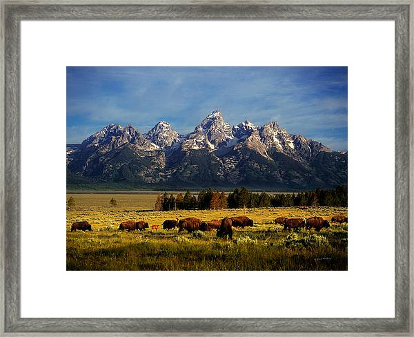 Buffalo Under Tetons Framed Print