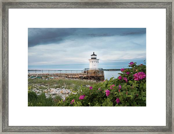 Bug Light Blooms Framed Print