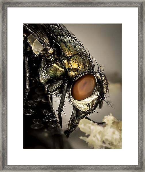 Bug On A Bug Framed Print