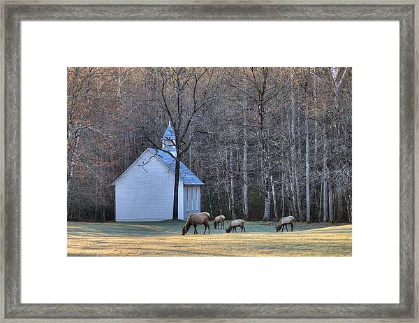 Bull Elk Attending Palmer Chapel  In The Great Smoky Mountains National Park Framed Print