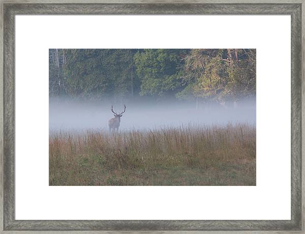 Framed Print featuring the photograph Bull Elk Disappearing In Fog - September 30 2016 by D K Wall