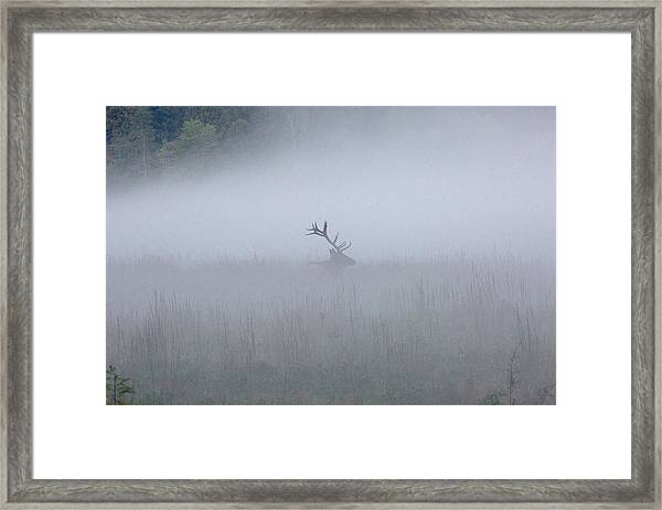 Framed Print featuring the photograph Bull Elk In Fog - September 30, 2016 by D K Wall