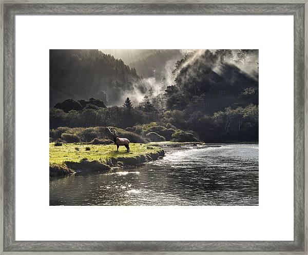 Bull Elk In Wilderness Framed Print