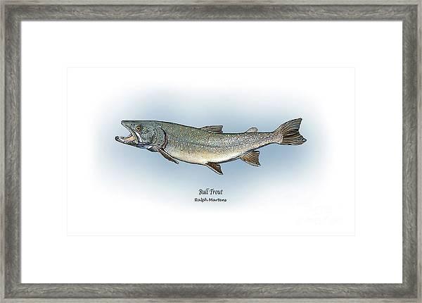 Bull Trout Framed Print