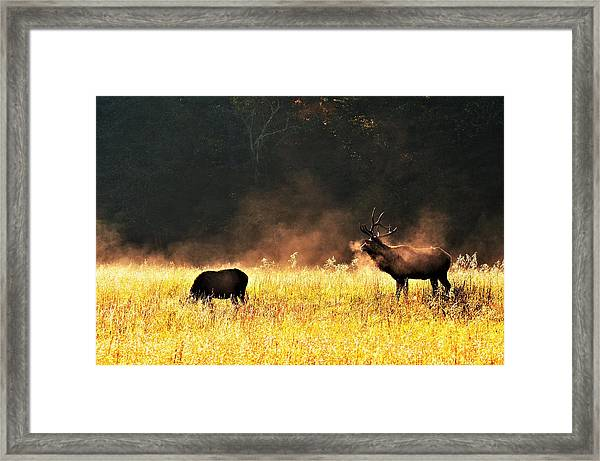 Bull With His Girl Framed Print