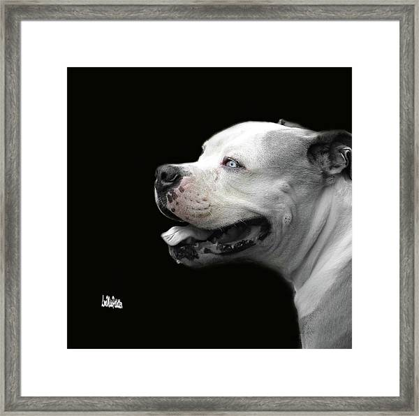 Bulldog Sando  Portrait  Framed Print