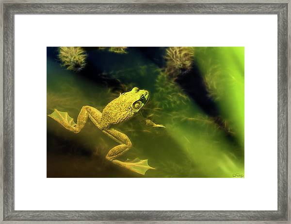 Framed Print featuring the photograph Bullfrog In A Pond by Dee Browning