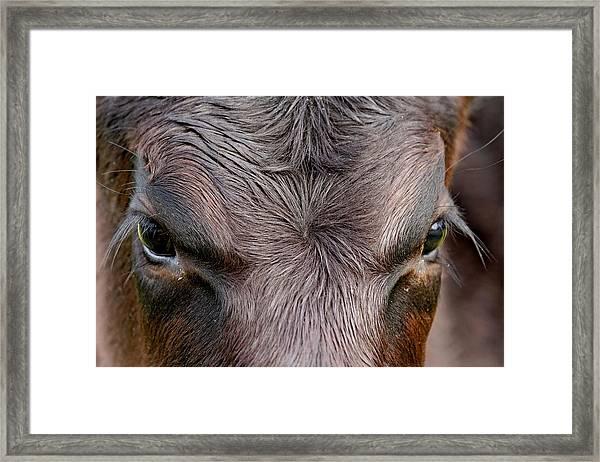 Bull's Eye Framed Print
