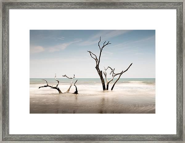 Bulls Island C-v Framed Print