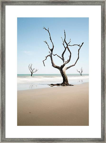 Bulls Island C-x Framed Print