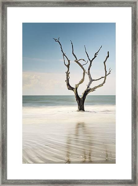 Bulls Island C-xii Framed Print