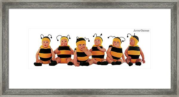Bumblee Bees Framed Print