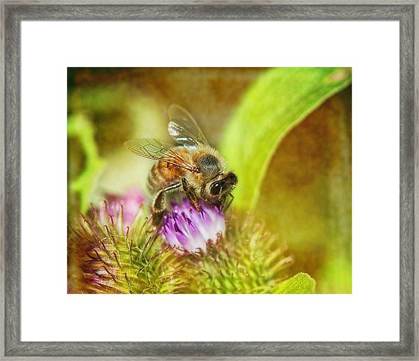 Bumbling Bee Framed Print
