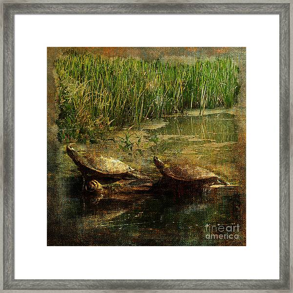 Bump On A Log 2015 Framed Print