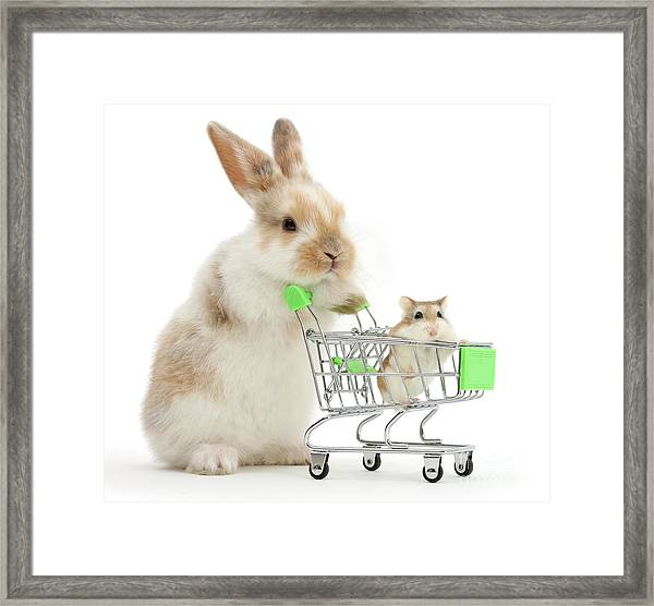 Bunny Shopping Framed Print