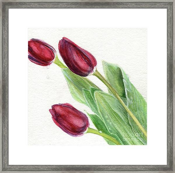 Burgundy Tulips Framed Print