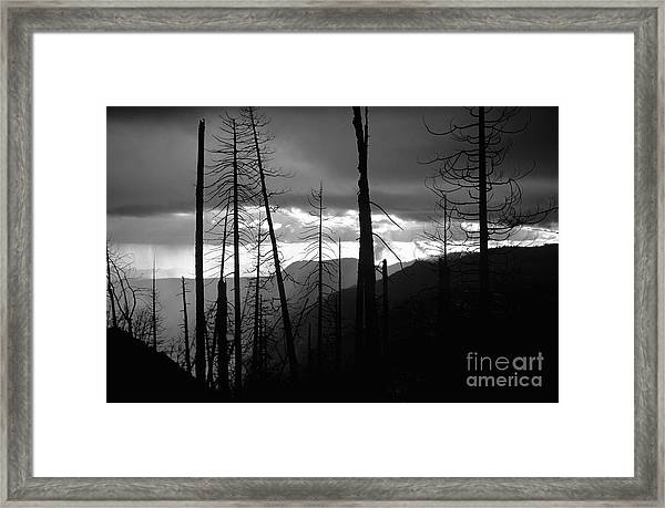 Burnt Forest - Yosemite Framed Print