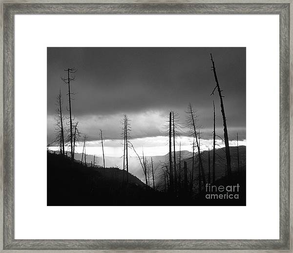 Burnt Forest II - Yosemite Framed Print
