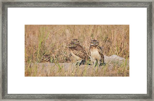 Burrowing Owl Party Framed Print