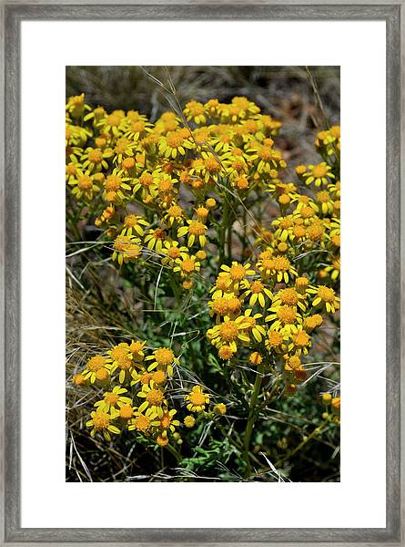Burst Of Yellow Framed Print