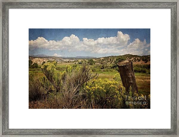 Bush Creek Framed Print