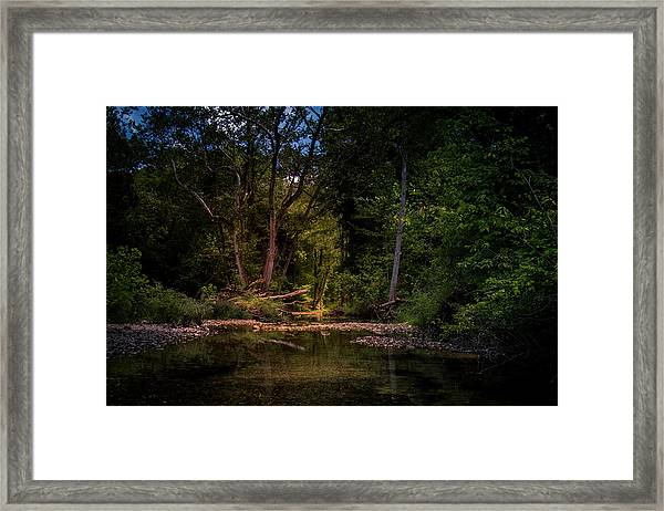 Busiek State Forest Framed Print