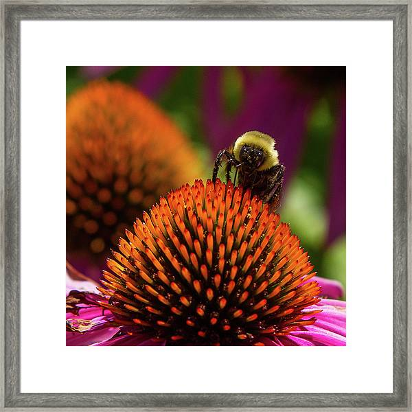 Busy As A ... Just Busy Framed Print