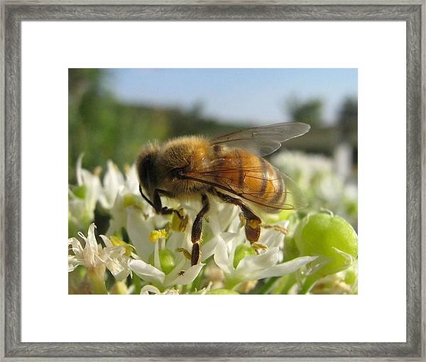 Busy Bee 6 Framed Print by Rebecca Shupp