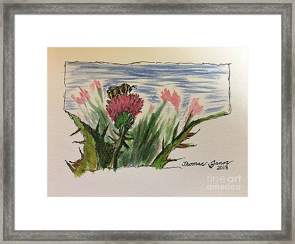 Busy Bumblebee  Framed Print