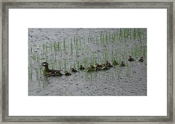 Busy Summer Ahead Framed Print