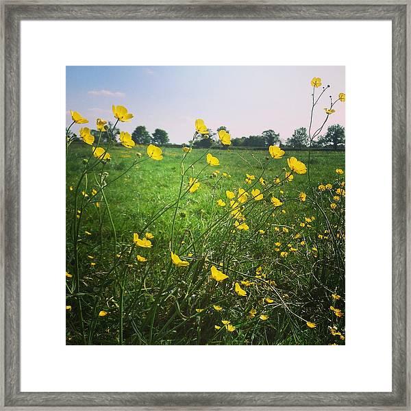 Buttercups Meadow Framed Print