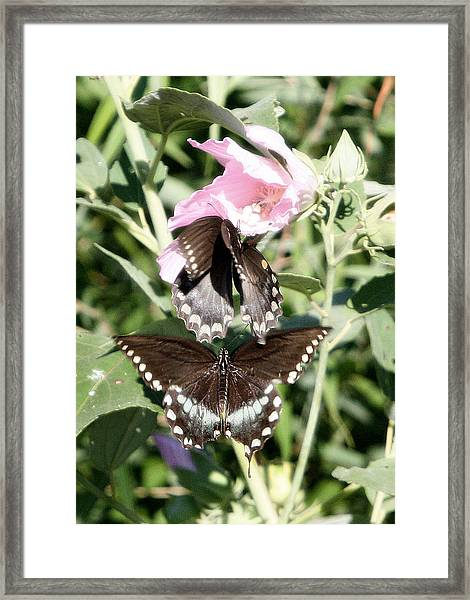 Butterflies Are Free 3 Framed Print