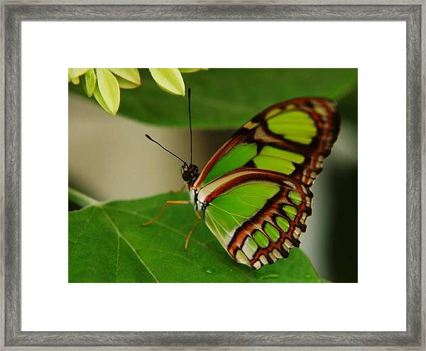 Butterfly 2 Framed Print by Scott Gould