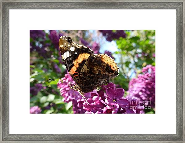 Butterfly 7 Framed Print