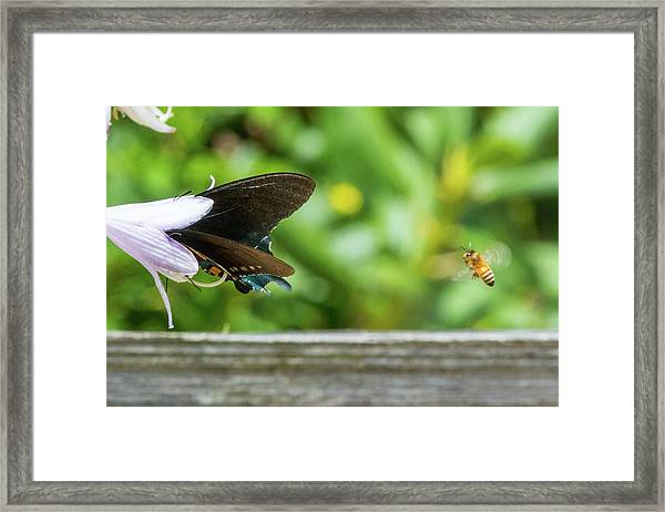 Framed Print featuring the photograph Butterfly And Bee by D K Wall