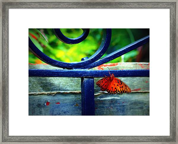 Butterfly At The Gate Framed Print
