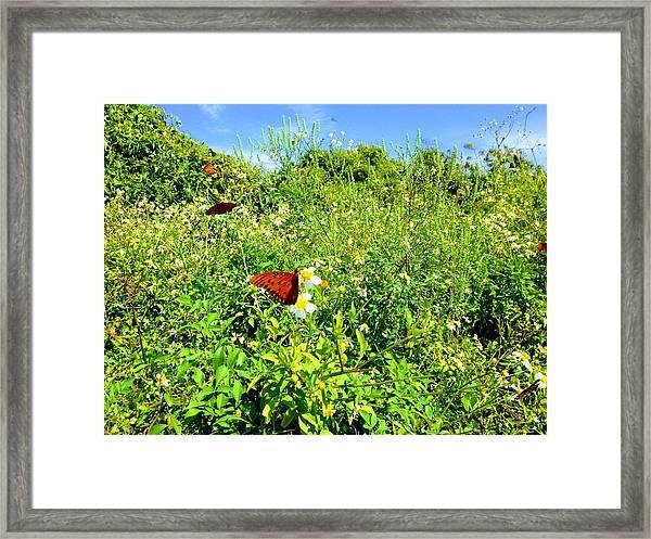Butterfly Bonanza Framed Print