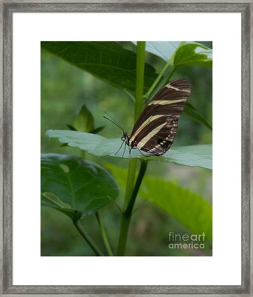 Butterfly 2 Framed Print