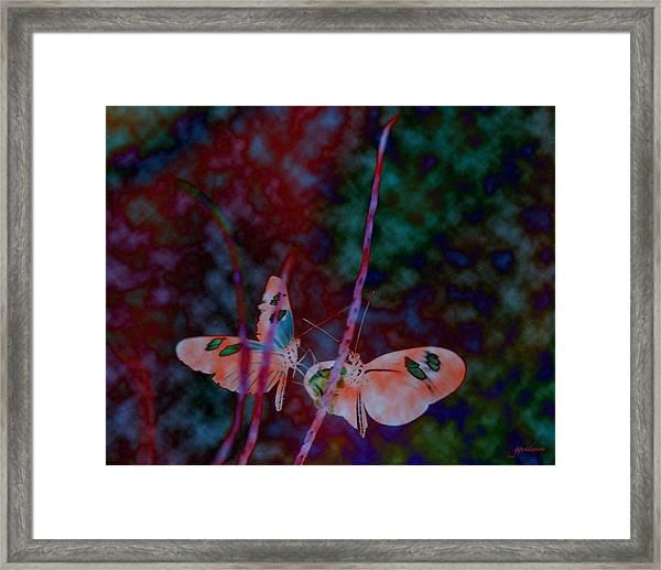 Butterfly Dream Framed Print