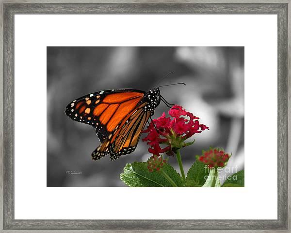 Butterfly Garden 01 - Monarch Framed Print