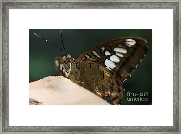Butterfly Macro Framed Print