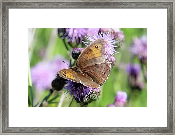 Butterfly Photograph  Framed Print