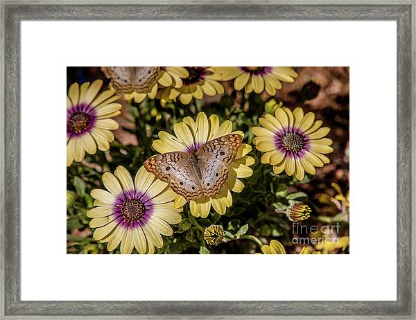 Butterfly On Blossoms Framed Print