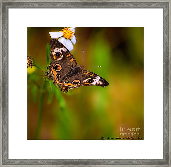 Butterfly One Framed Print