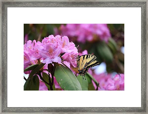Butterfly Paradise Framed Print