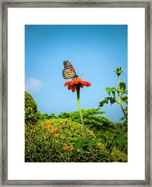 Butterfly Perch Framed Print