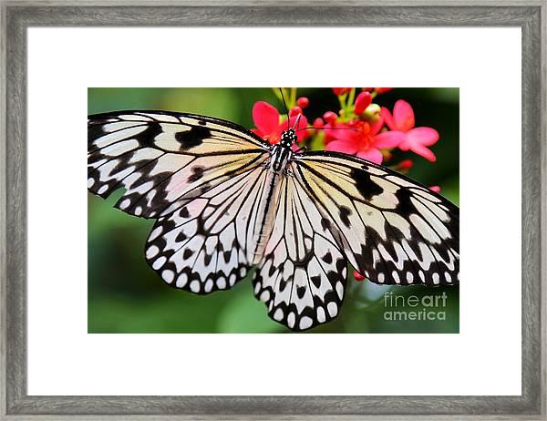 Butterfly Spectacular Framed Print