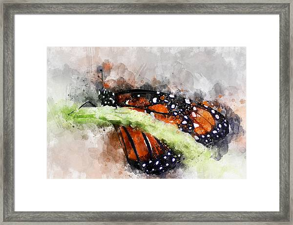 Butterfly Watercolor Framed Print